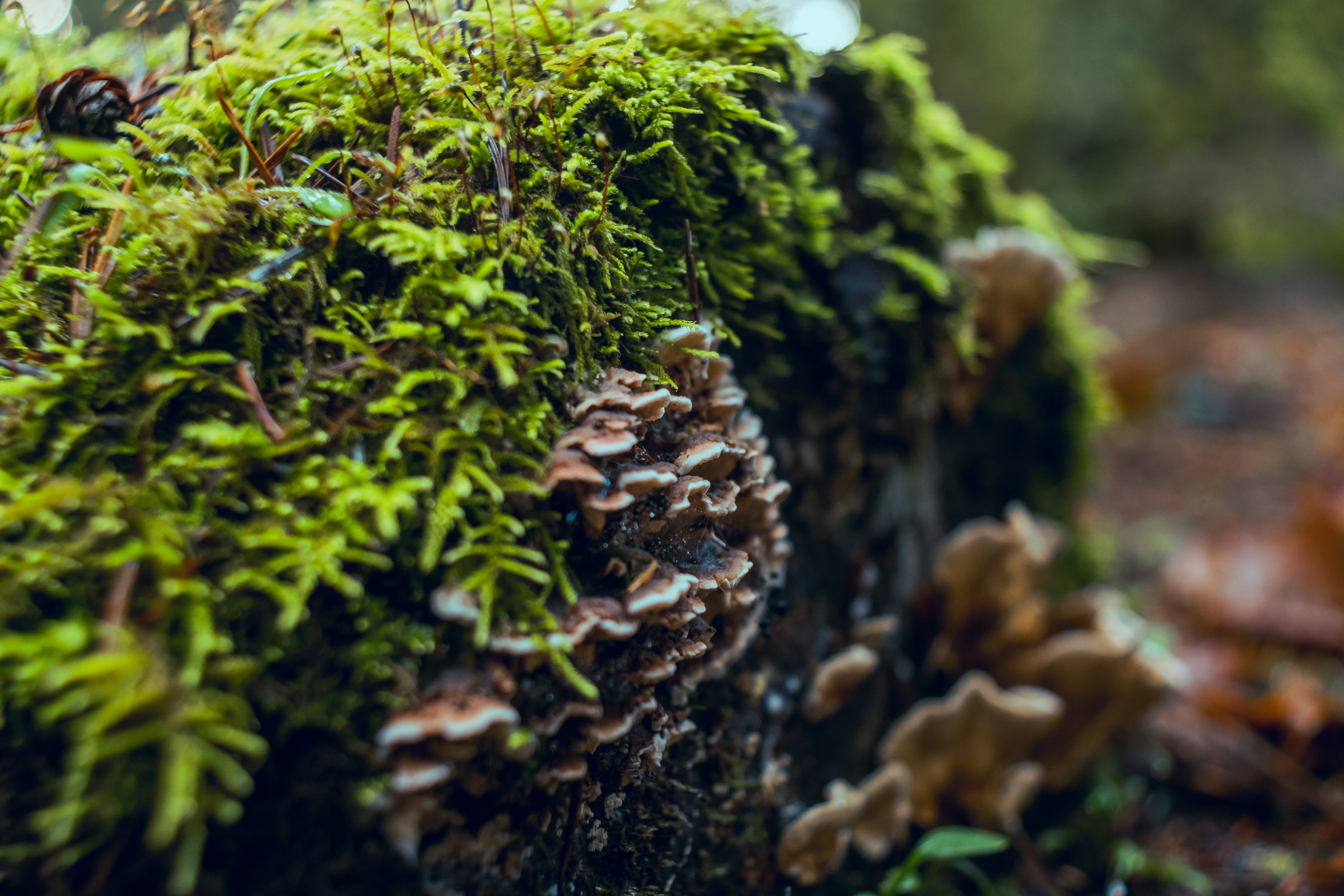 Free stock photo of chemistry, decay, decomposition, ecology