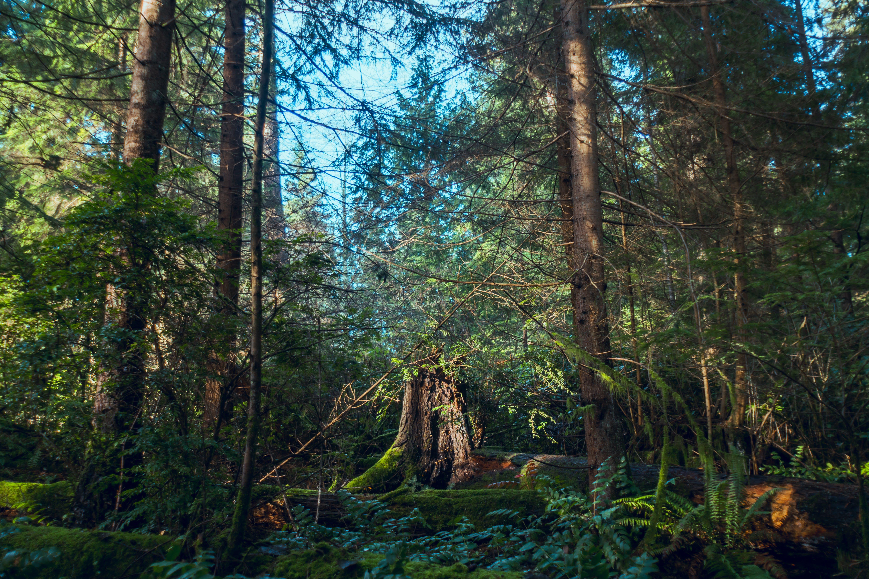 Free stock photo of beautiful, biology, chemistry, dark forest
