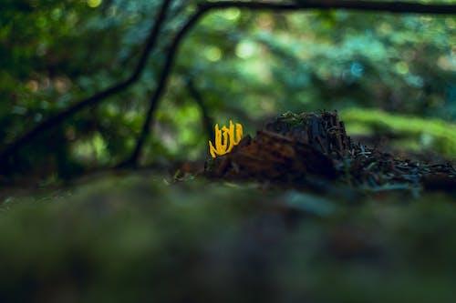 Gratis arkivbilde med forfall, fysikk, gammel skog, gammel vekst