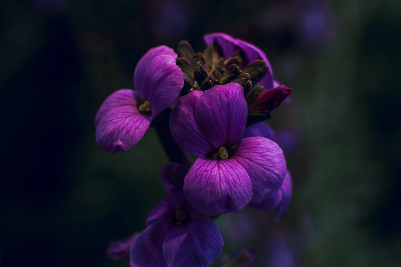 Free stock photo of bautiful, beautiful flower, beautiful nature, bokeh