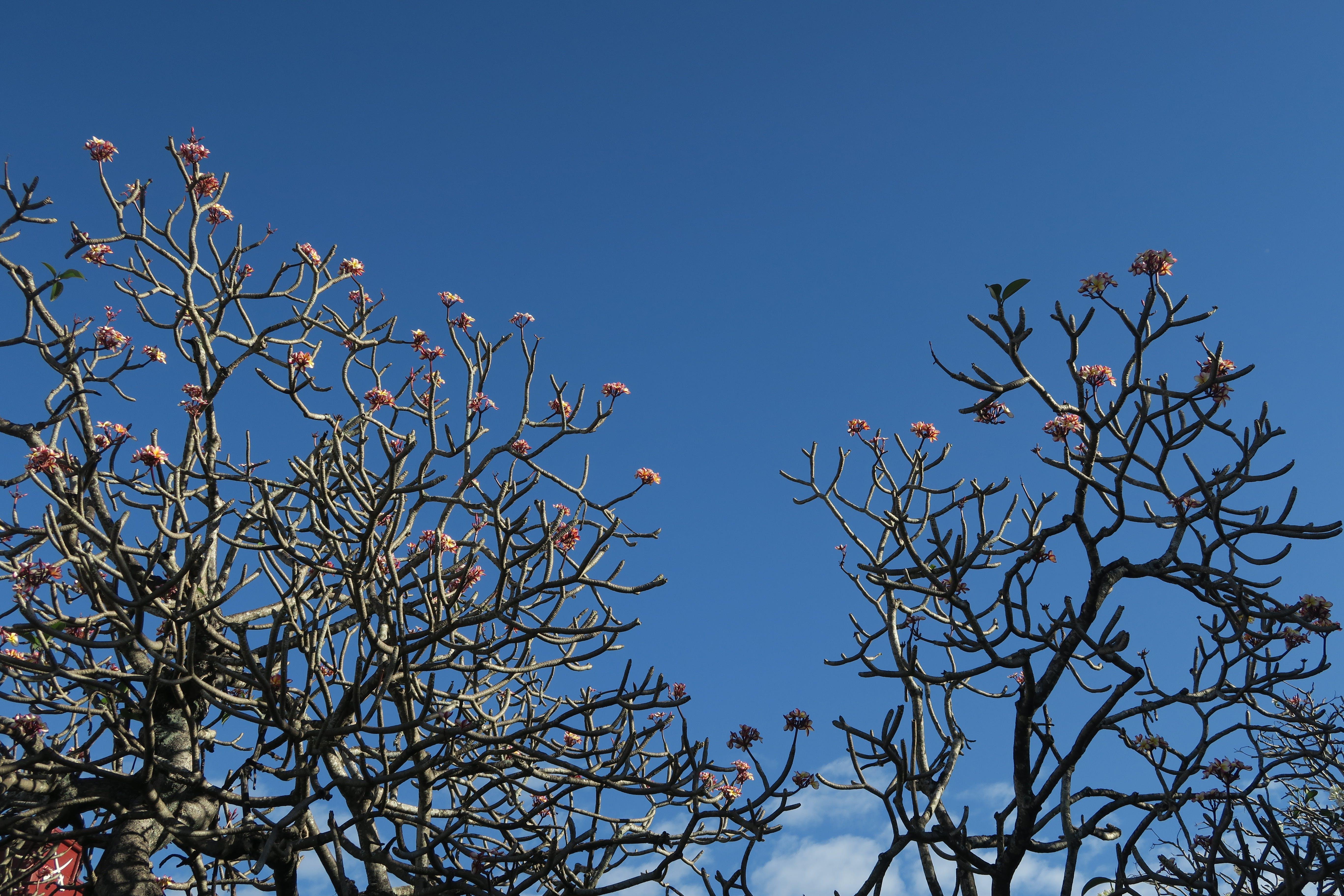 Free stock photo of flowers, tree