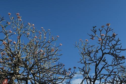 樹, 花 的 免費圖庫相片