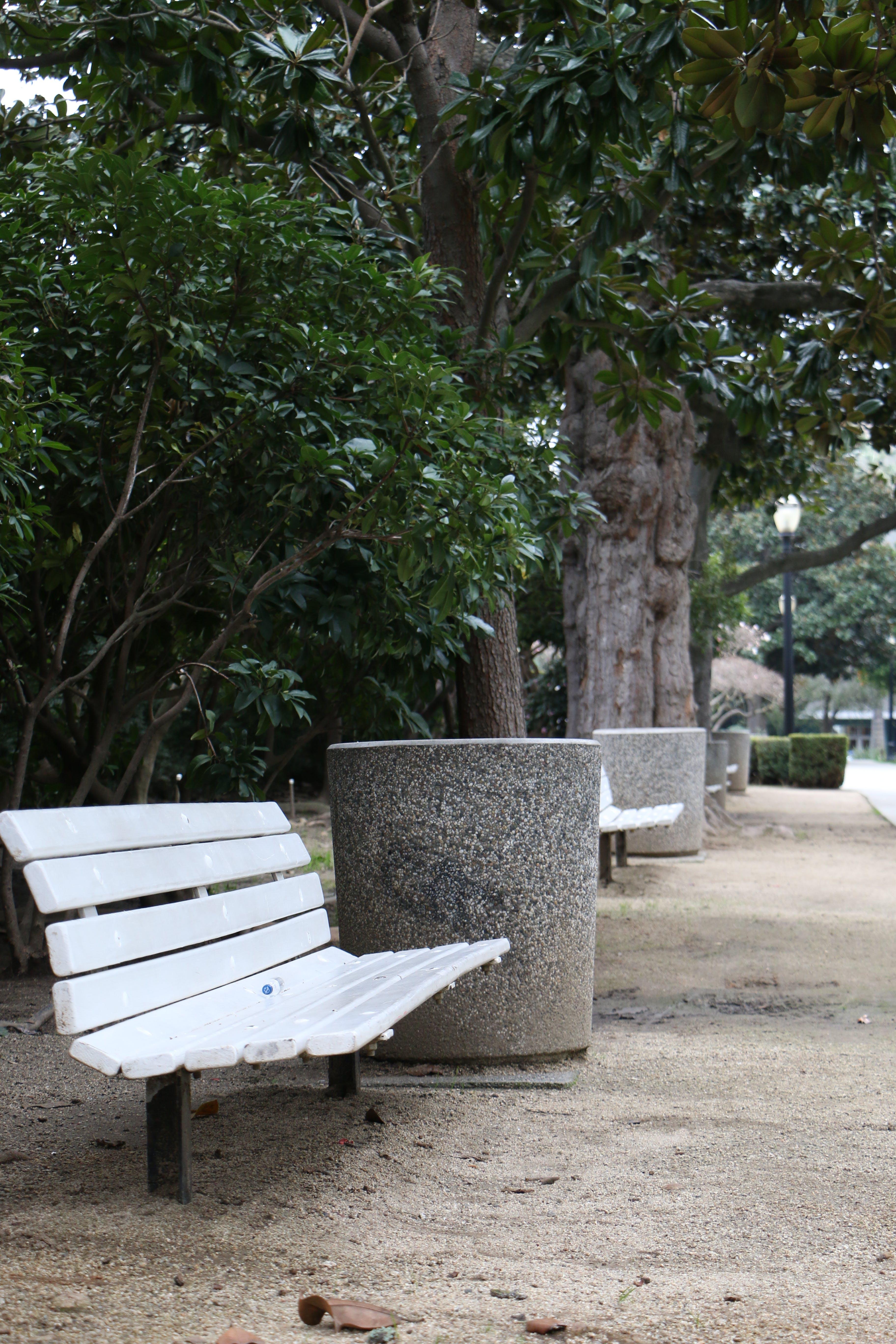 Free stock photo of bench, bushes, park, tree