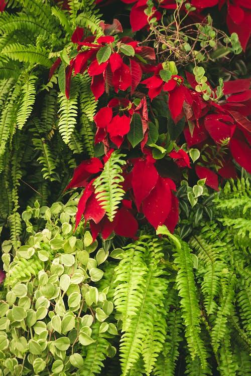 Бесплатное стоковое фото с заводы, листья, растения, сад