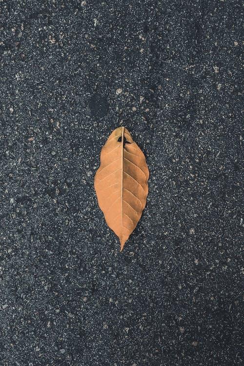 Gratis lagerfoto af asfalt, blad, dagslys, efterår