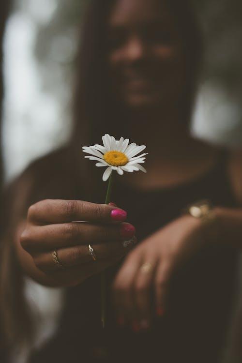 Селективный фокус Фотография женщины, держащей цветок белой ромашки