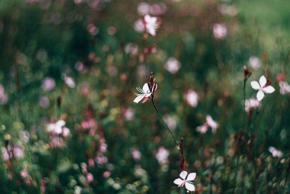 New free stock photo of flowers, garden, petals
