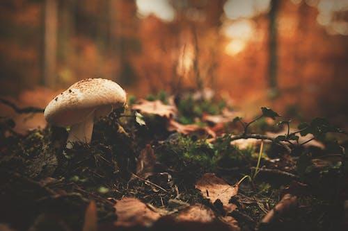 Immagine gratuita di alberi, Boleti, boschi, cibo