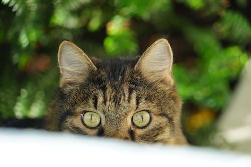 Free stock photo of animal, cat, hidding