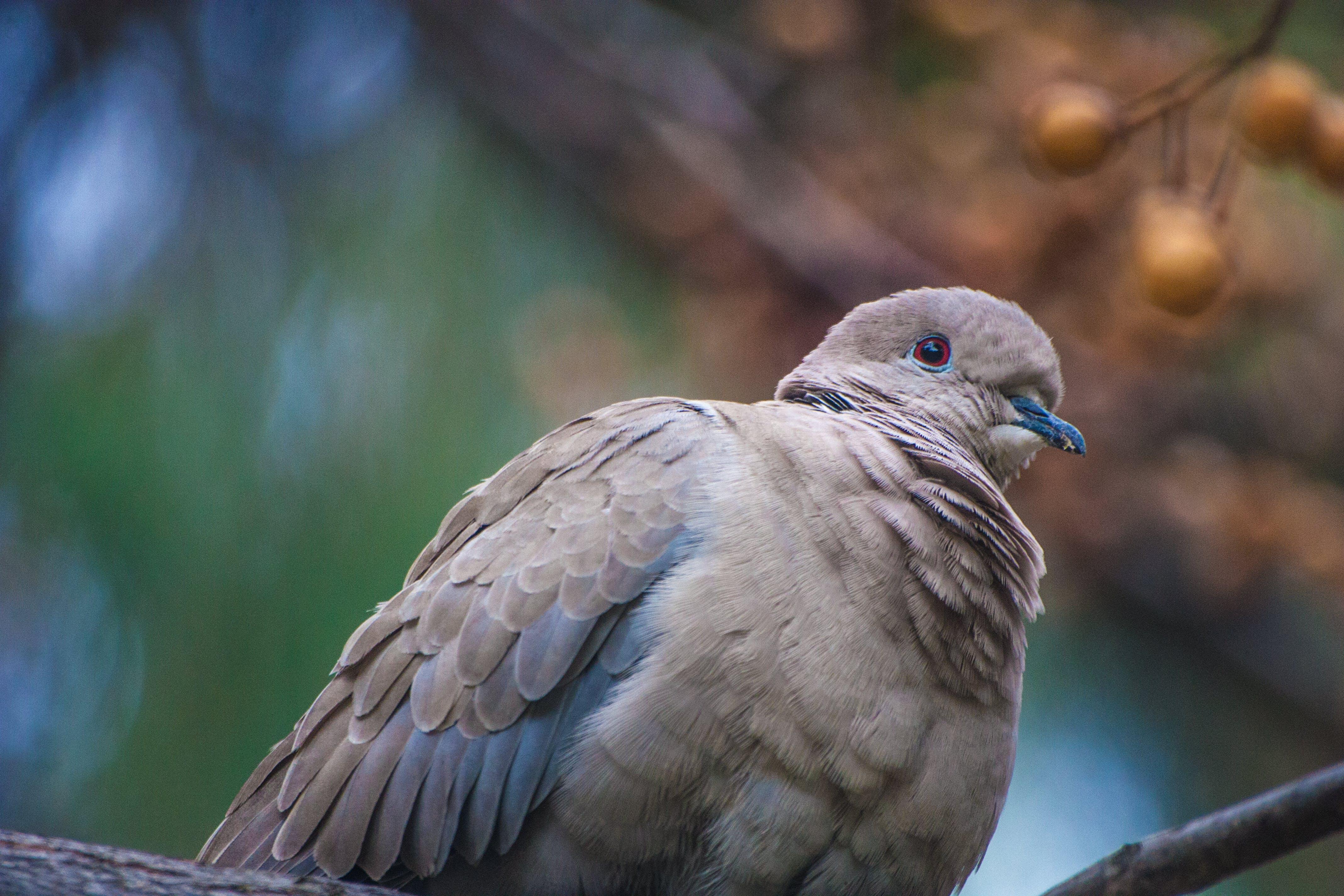 Free stock photo of animal, bird, feather, nature