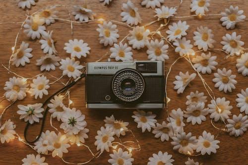Free stock photo of câmera vintage