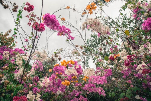 Fotos de stock gratuitas de flores