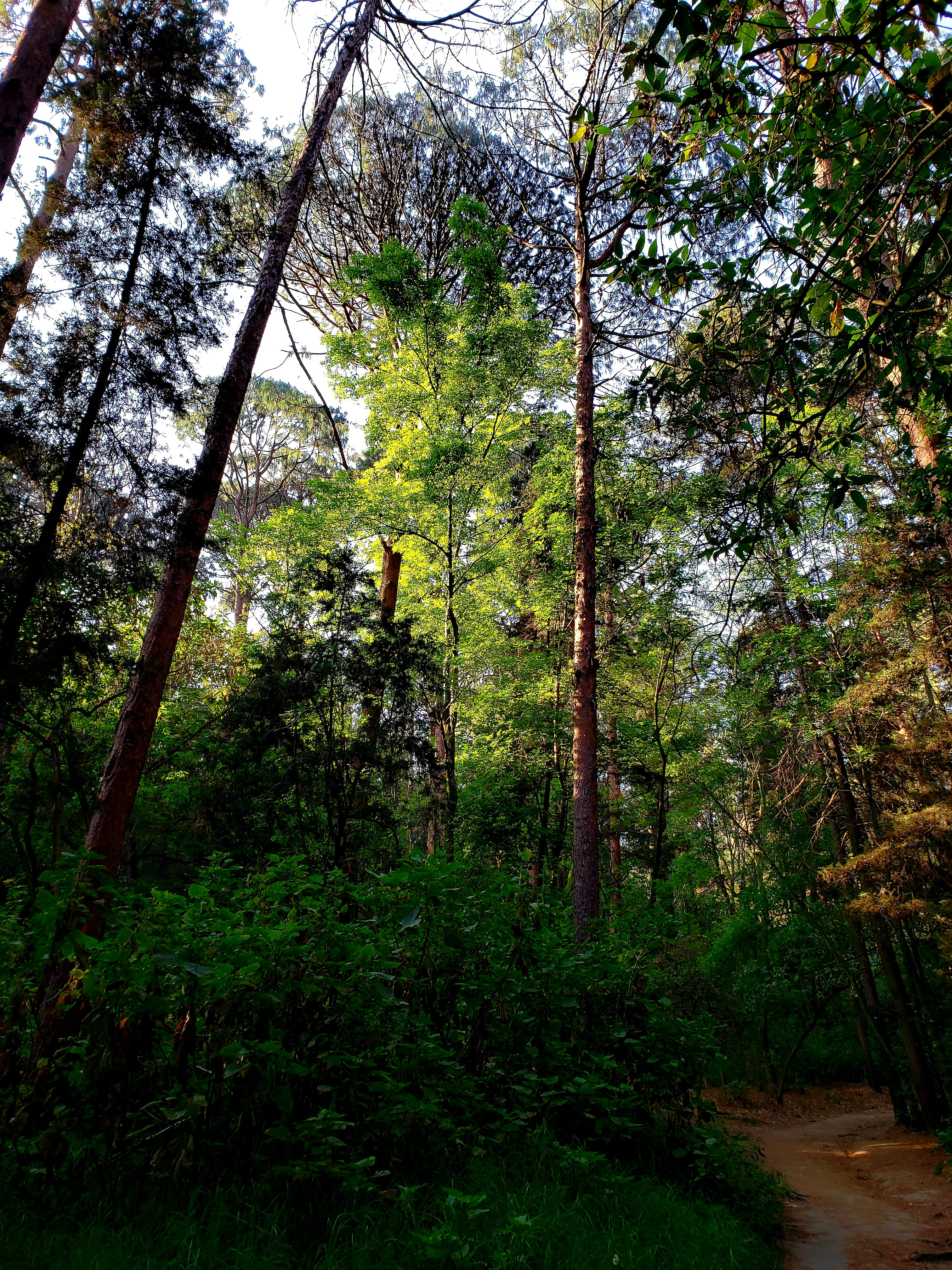 Free stock photo of beauty in nature, forest, lovemycountry, mexico
