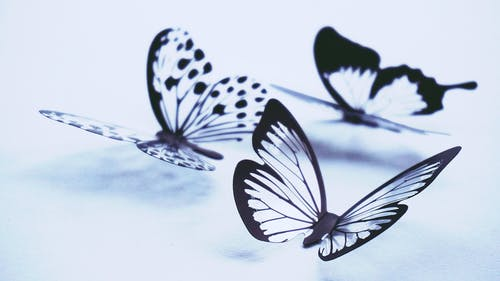 300 Beautiful Butterfly Pictures Pexels Free Stock Photos