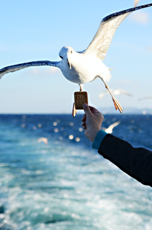 Free stock photo of animal, eating, Martı, seagull