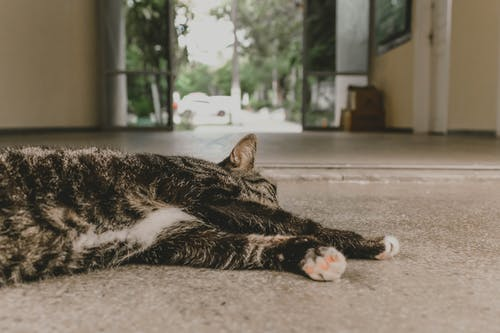 Free stock photo of cat, Lying down, sleepy cat
