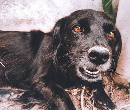 Free stock photo of animal lover, animals, beautiful eyes, black