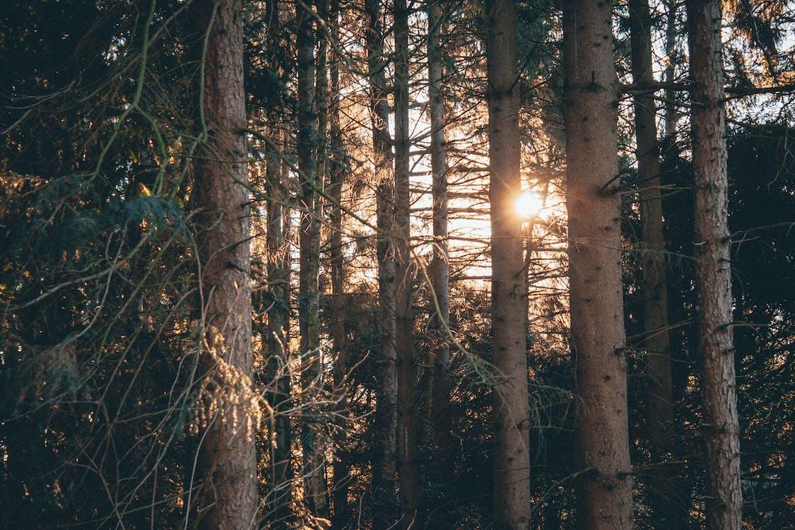 alam, batang, cabang