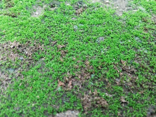Imagine de stoc gratuită din adâncime de câmp, câmp, crește, creștere