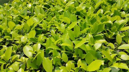 Foto profissional grátis de close, ecológico, plantas
