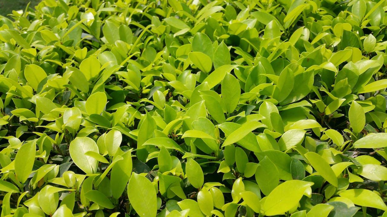 заводы, зеленый, растения