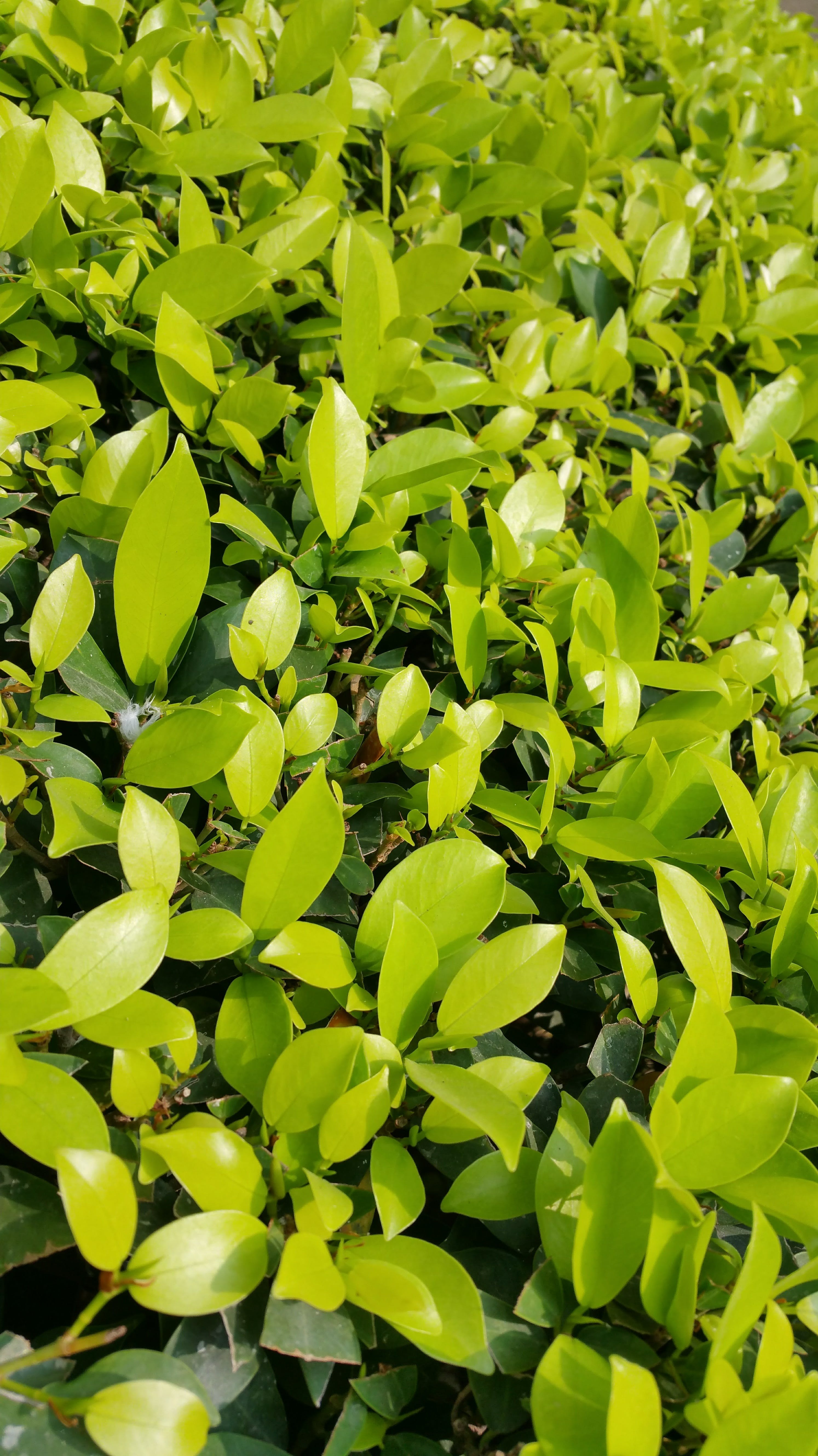 Free stock photo of garden, leaves, plants, green
