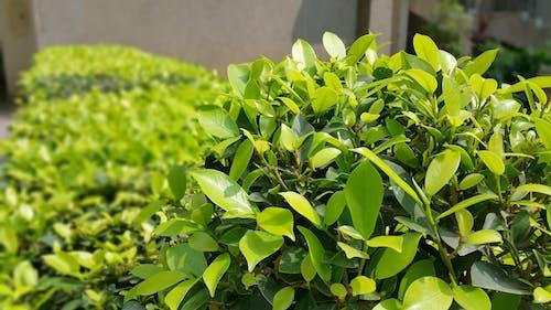 Foto d'estoc gratuïta de arbust, bonic, brillant, color