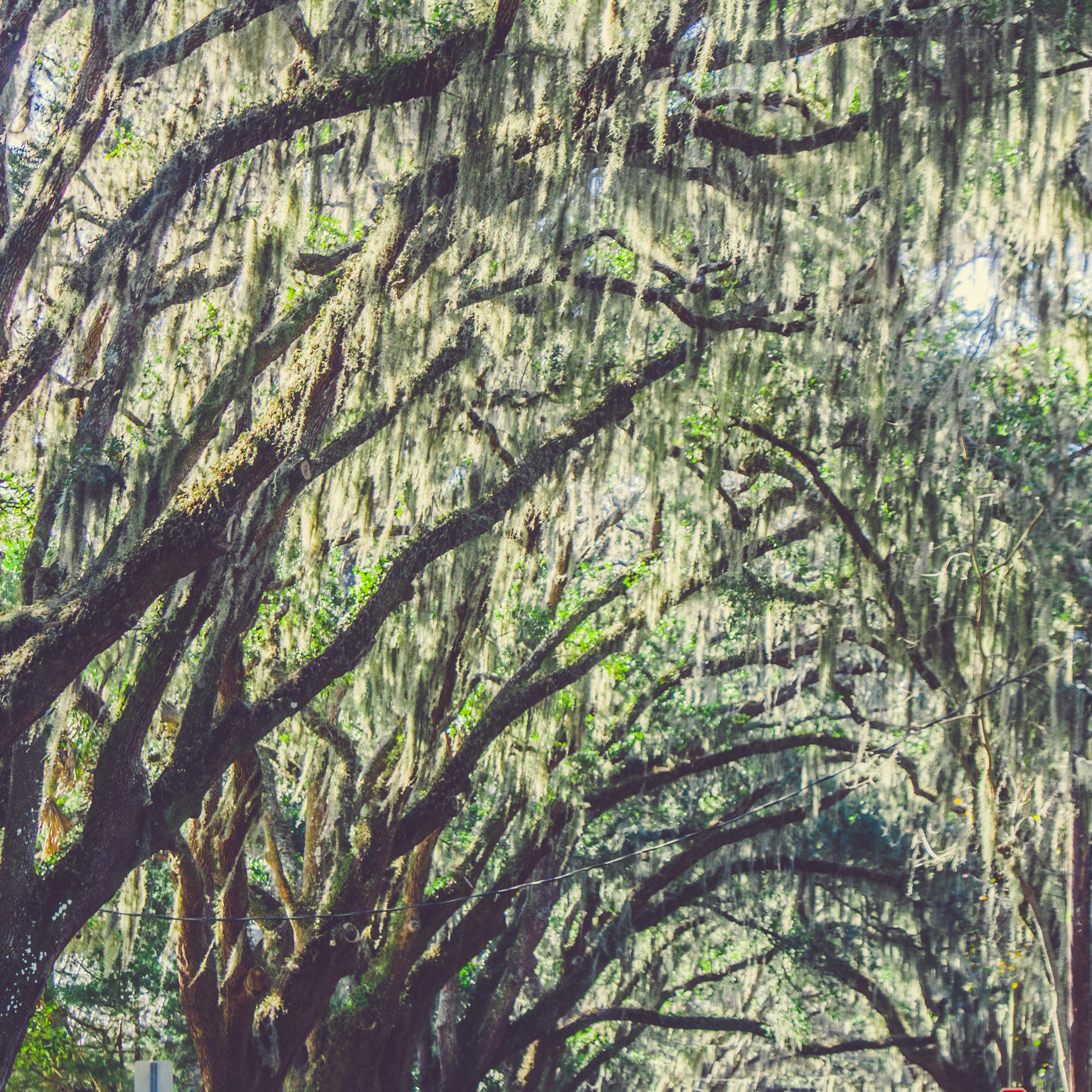 Free stock photo of florida, moss, nature, trees