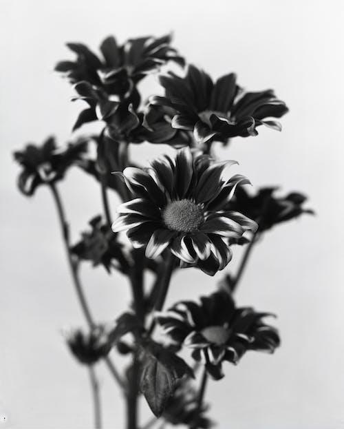Ảnh lưu trữ miễn phí về cánh hoa, đẹp, hệ thực vật, hoa