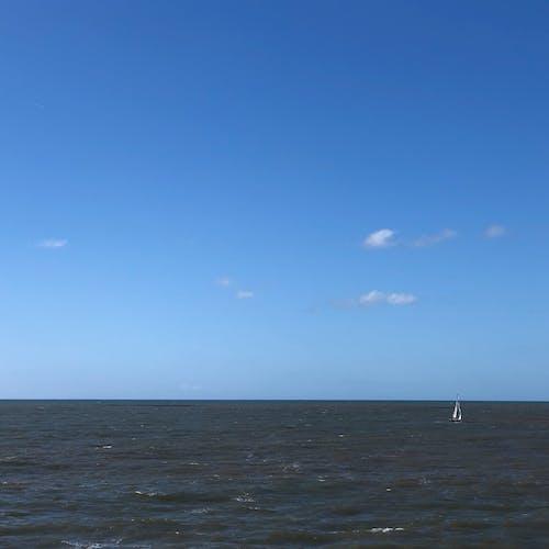 Kostenloses Stock Foto zu möwe, oceanside side~~pos=headcomp, pelikan, seebrücke