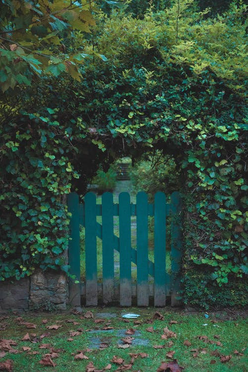 Fotos de stock gratuitas de jardín, plantas, puerta, verde