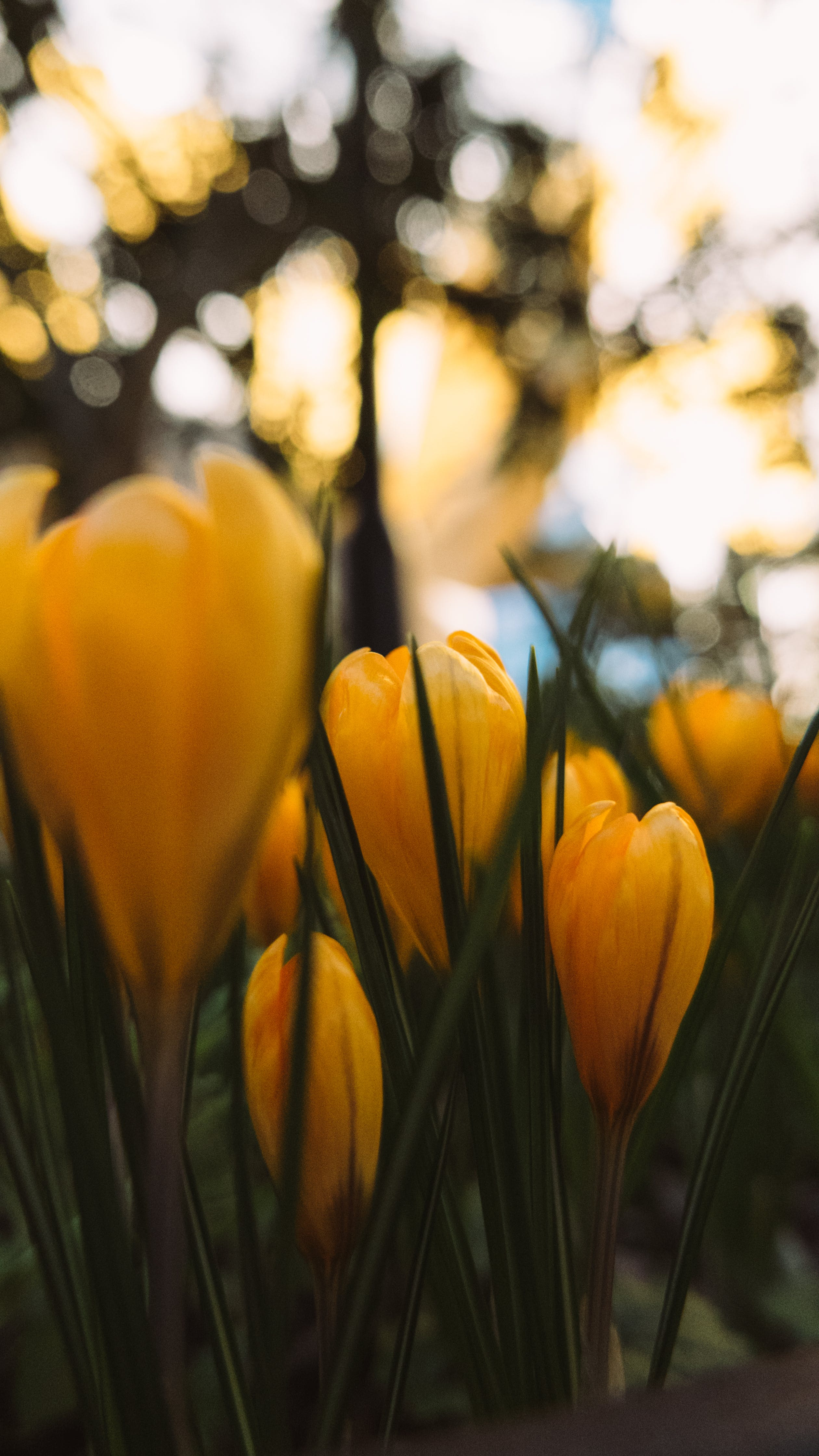 Free stock photo of flower, green, nature, plants