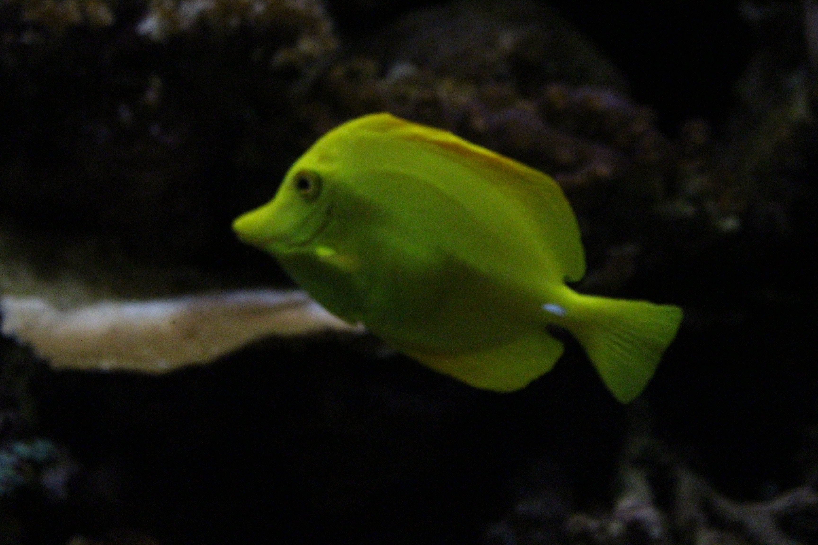 Free stock photo of colorful, fish, pretty