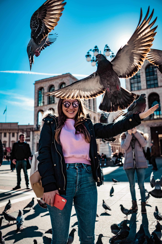 Ảnh lưu trữ miễn phí về ánh sáng ban ngày, bay, chim bồ câu, chụp ảnh