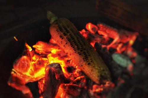 Fotos de stock gratuitas de asar, carbón, hoguera, maíz