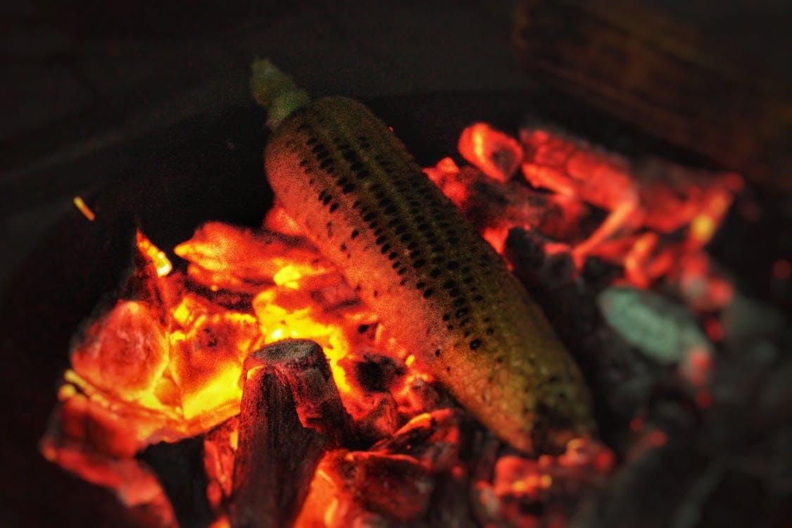 faszén, kukorica, máglya