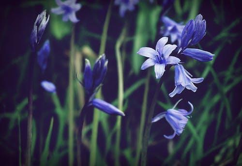 天性, 微妙, 明亮, 植物群 的 免费素材照片
