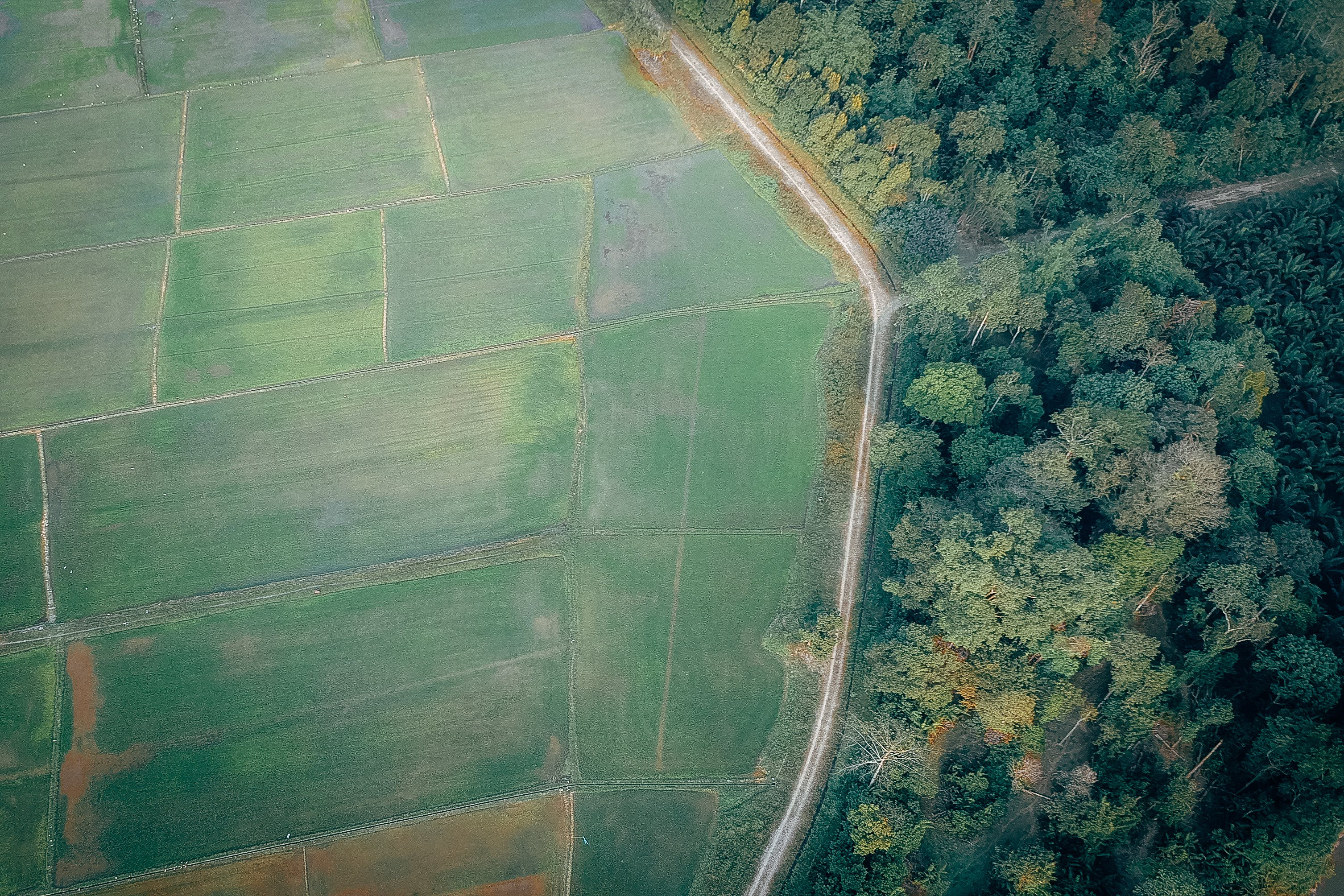 Aerial View Photography of Rice Field and Green Forest