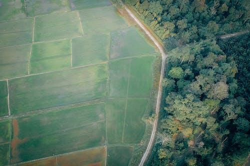 Foto d'estoc gratuïta de a pagès, arbres, autopista, boscos