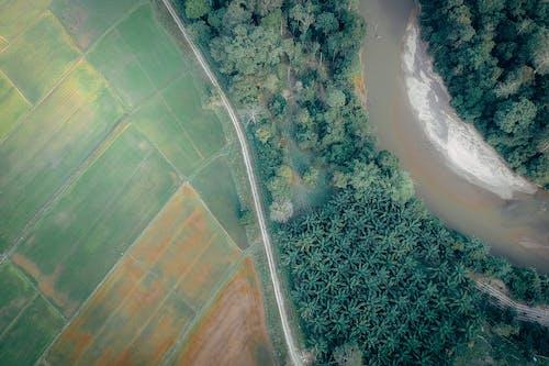 Foto d'estoc gratuïta de aigua, arbres, brillant, carretera