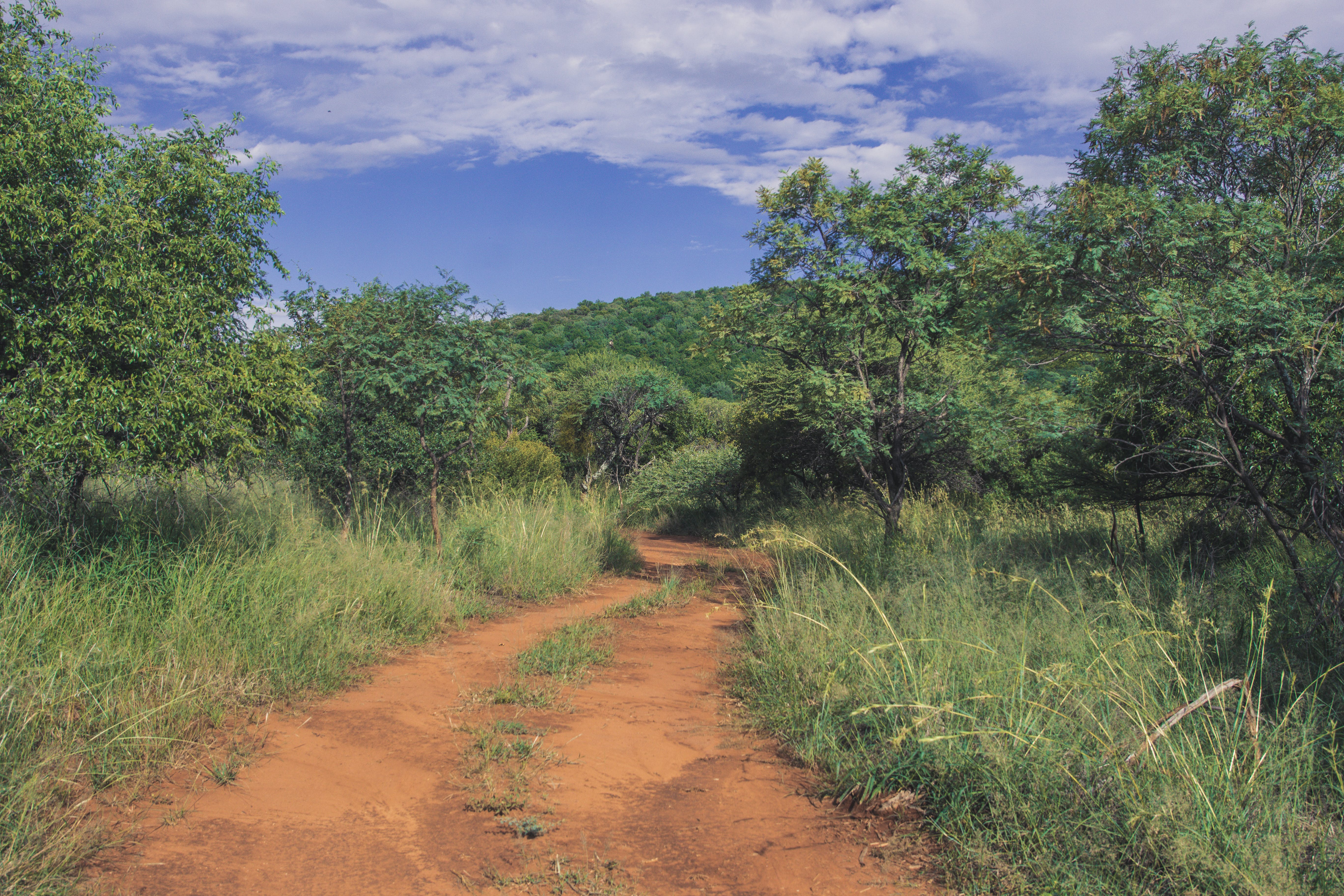 Free stock photo of africa, dirt road, landscape, mothernature