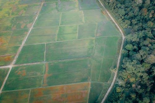 Фото сельскохозяйственных угодий возле леса, вид сверху