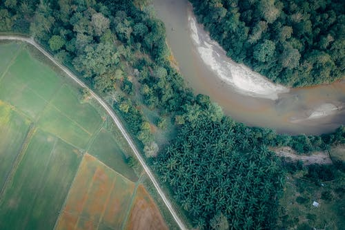 River Between Trees in Aerial Photography