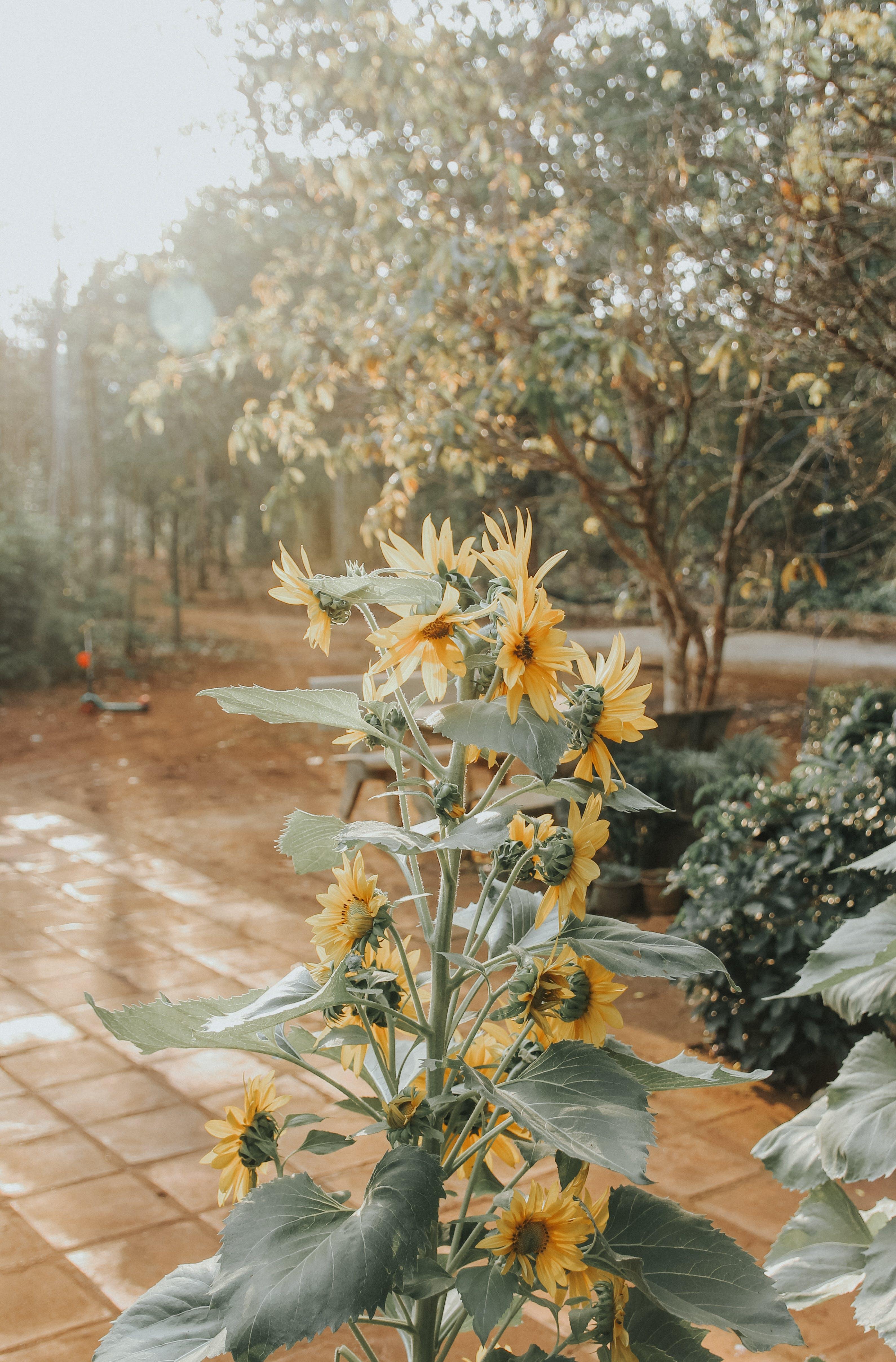 Free stock photo of beautiful, beautiful flower, light, retro