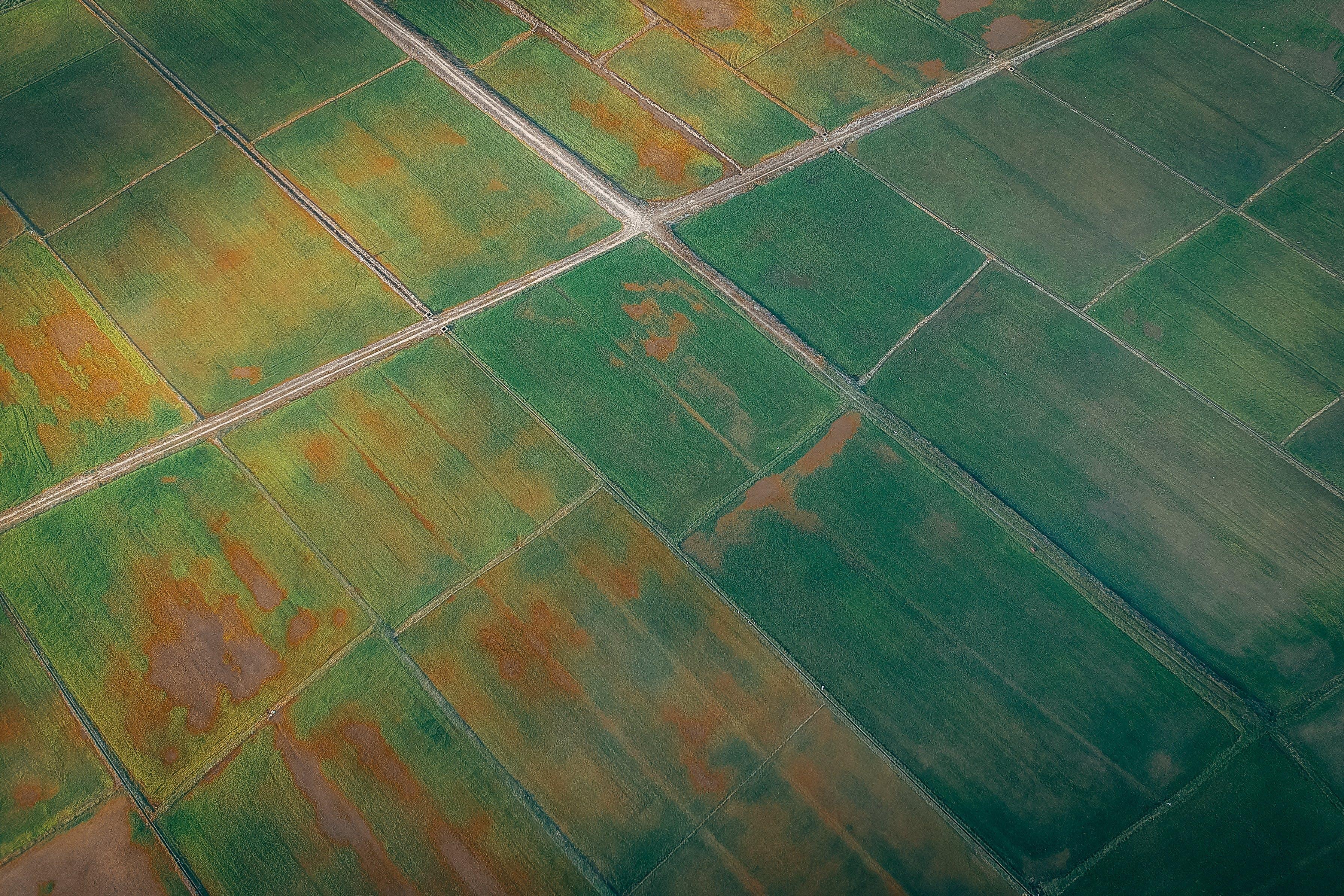 Foto d'estoc gratuïta de aeri, camps de cultiu, estampat, foto aèria