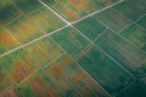 Darmowe zdjęcie z galerii z fotografia lotnicza, fotografia z drona, lotniczy, plantacja