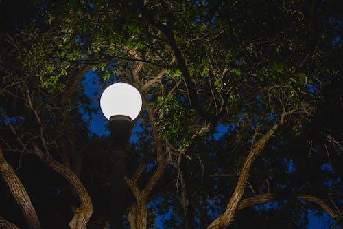 Δωρεάν στοκ φωτογραφιών με αντανάκλαση, δέντρα, δέντρο, ελαφρύς