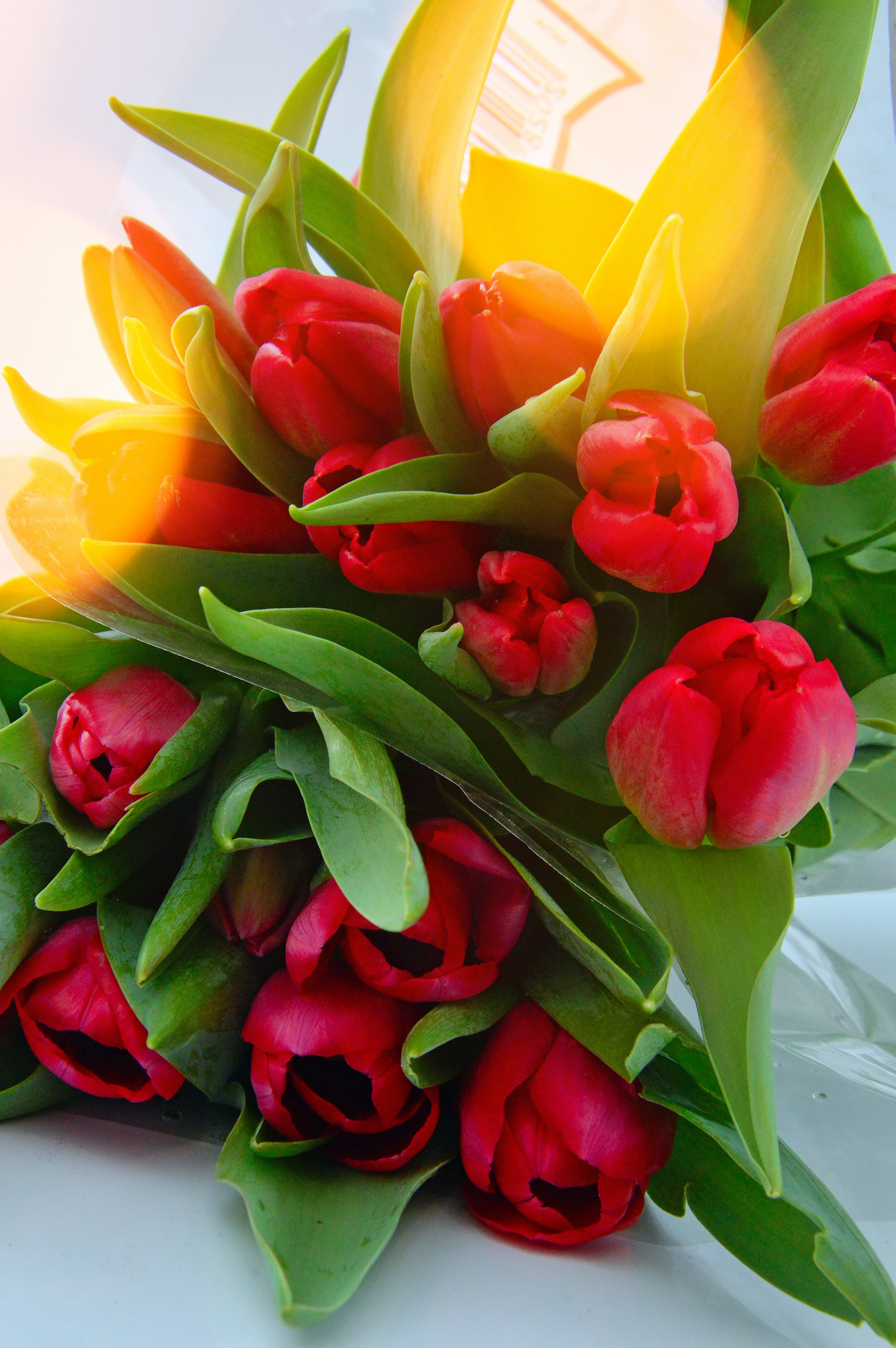 of bouquet of fresh spring red tulips