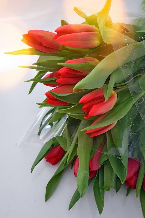 Ilmainen kuvapankkikuva tunnisteilla eloisa, eristynyt, kasvi, Kauneus