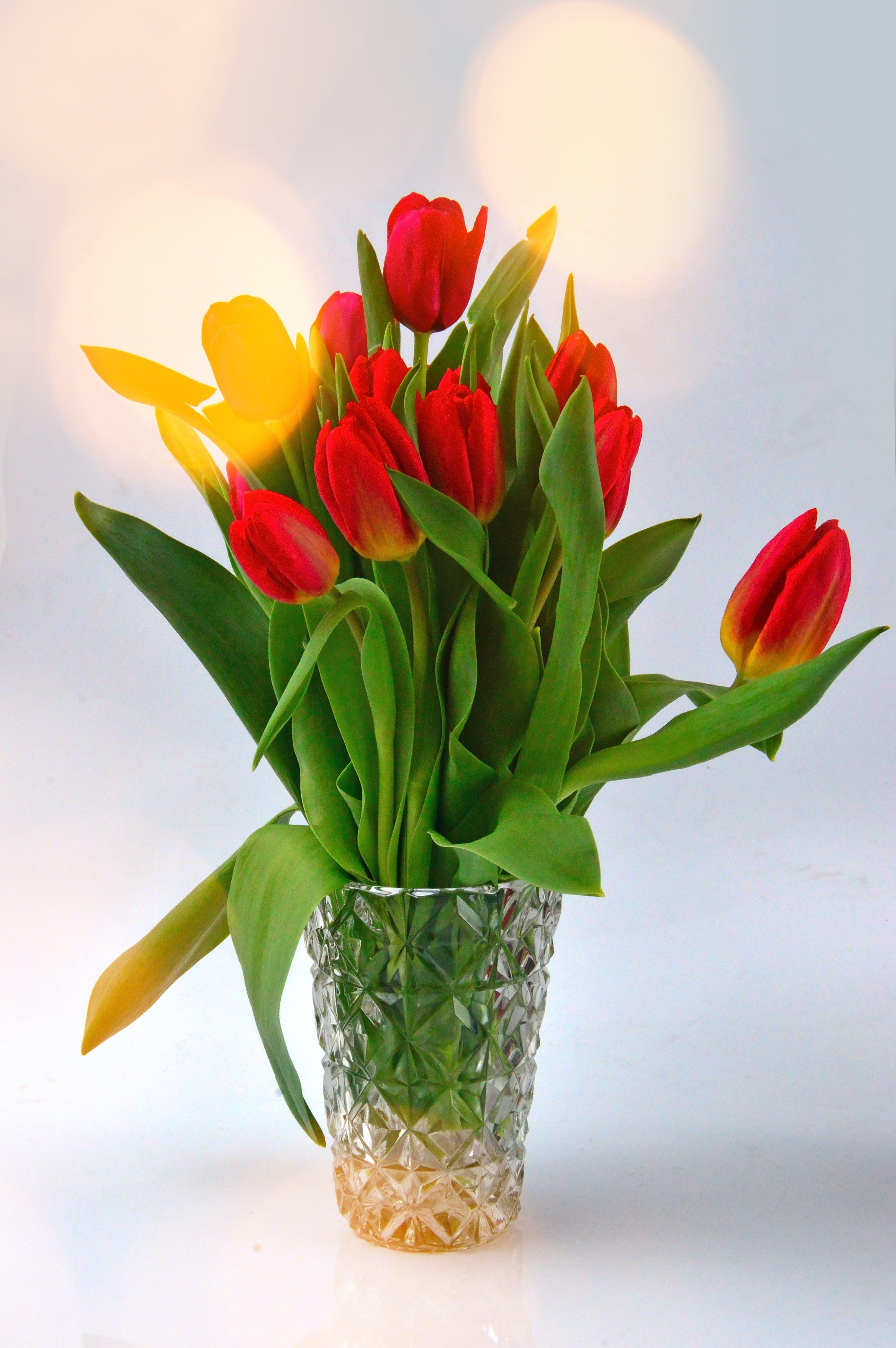 Free stock photo of background, beautiful, beauty, blossom